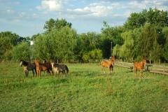 Atardeceres y caballos en la estancia